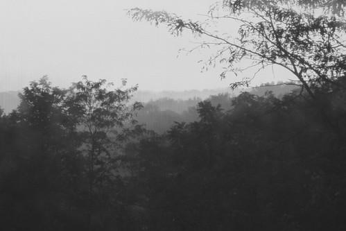 Misty morning Mercer Co KY