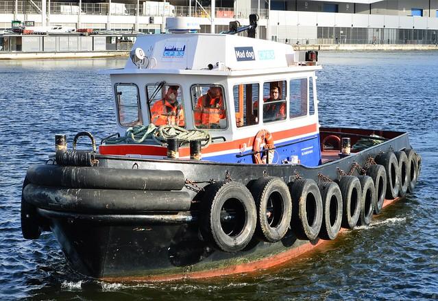 Maddog (2) @ Royal Victoria Dock 07-11-16