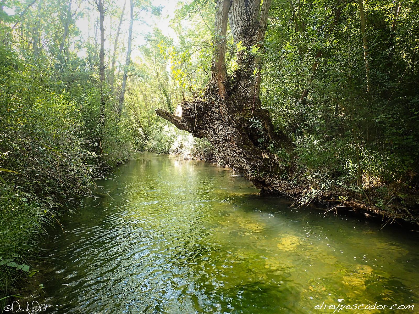 Tajuña River