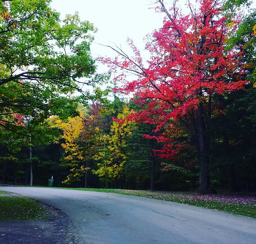 """Lovin' would be easy if your colors were like my dreams: red, gold, and green...."" (Yes, I am quoting Culture Club. Gotta problem wit dat?) #ChestnutRidge #OrchardPark #wny #autumn #lyrics #cultureclub #karmachameleon"
