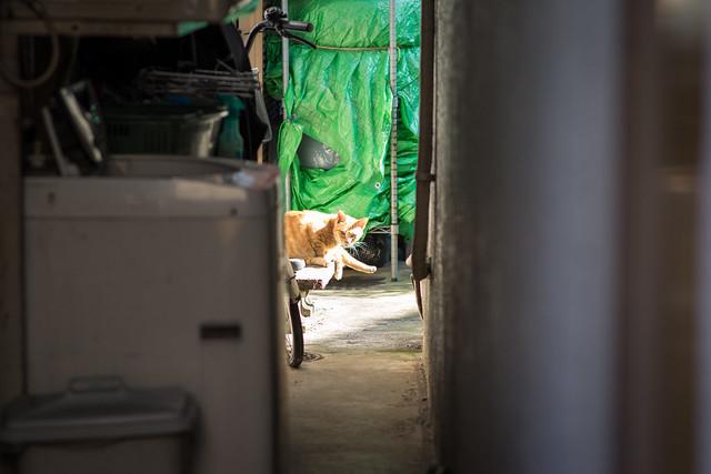 縁側でひなたぼっこするネコの写真