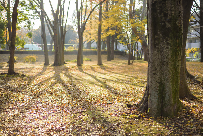 One autumn day, at an ordinary park