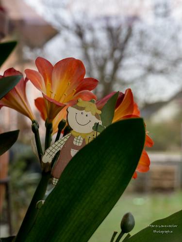 Ein glücklicher Gärtner