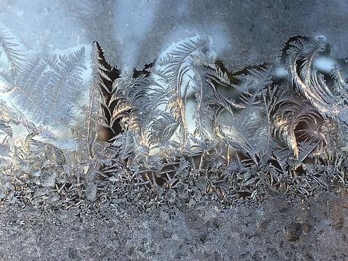 Fern-like Frost