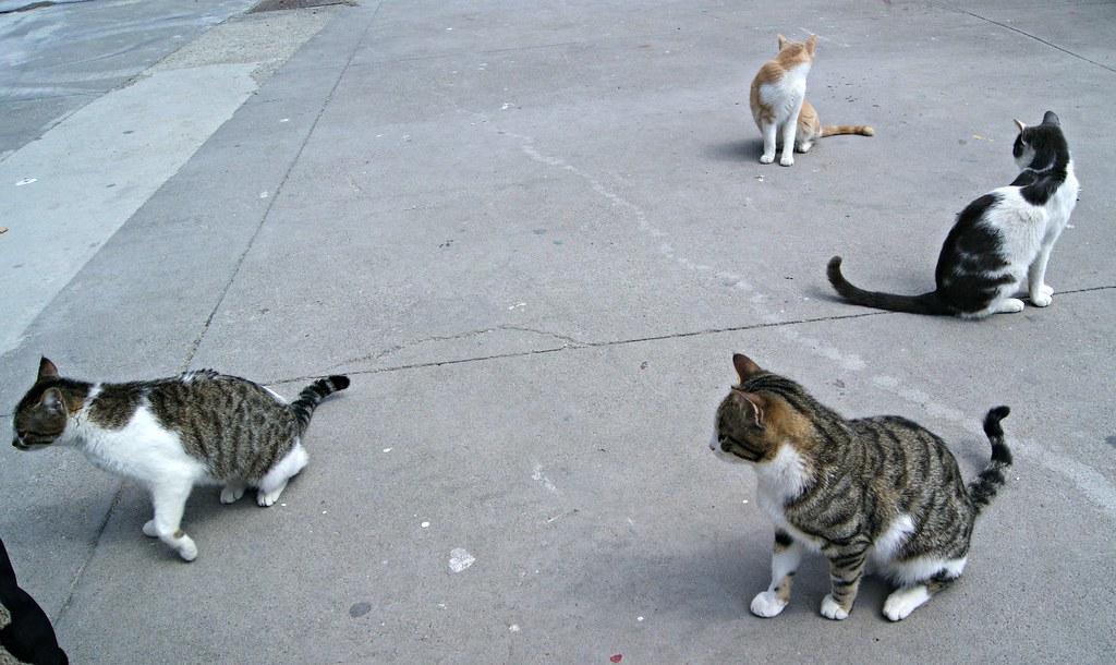 Kissat satamassa