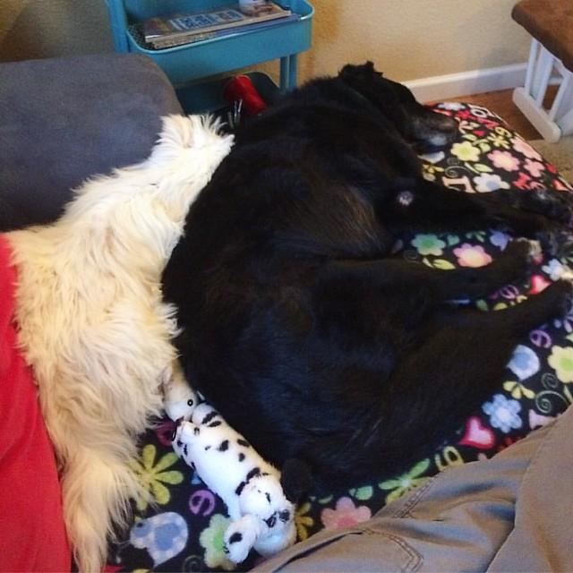Mr. Bennett spooning Maggie 💕