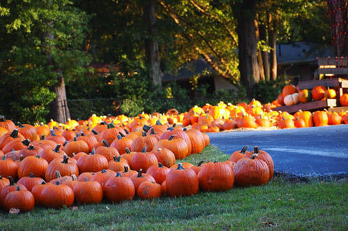 Briarcliff Pumpkin Patch