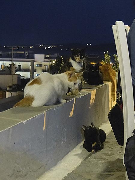 chats de nuit