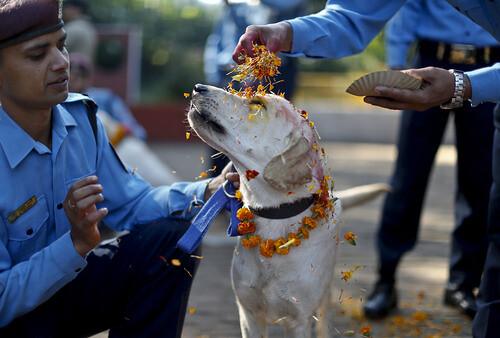 Dog worship day in Nepal