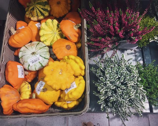 halloween, suomi, helsinki, finland, sisustus, interior design, decoration ,interior, koriste, sisustus, syksy, fall, autumn, halloween interior, syksyisiä kukkia, syksy kukat, fall flowers, autumnal flowers, kanerva, heather flower. pumpkin, kurpitsa, marrow, oranssi, orange, yellow, keltainen, pumpkins, heathers, kanervat, kurpitsat,