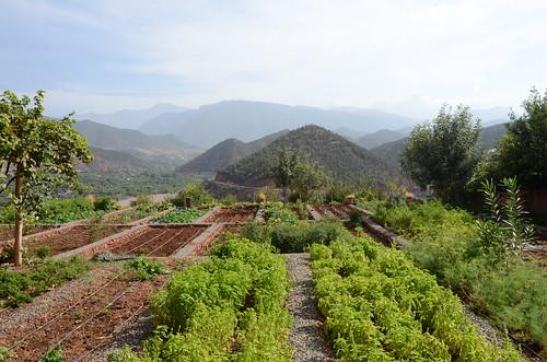 green gardens marrakech workshop