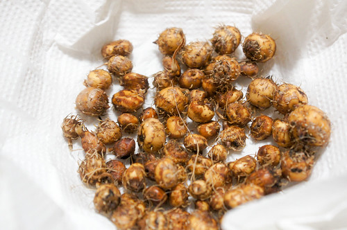 plant - タイガーナッツ