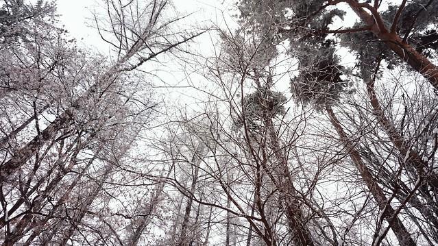 2017-01-1--02-13-26