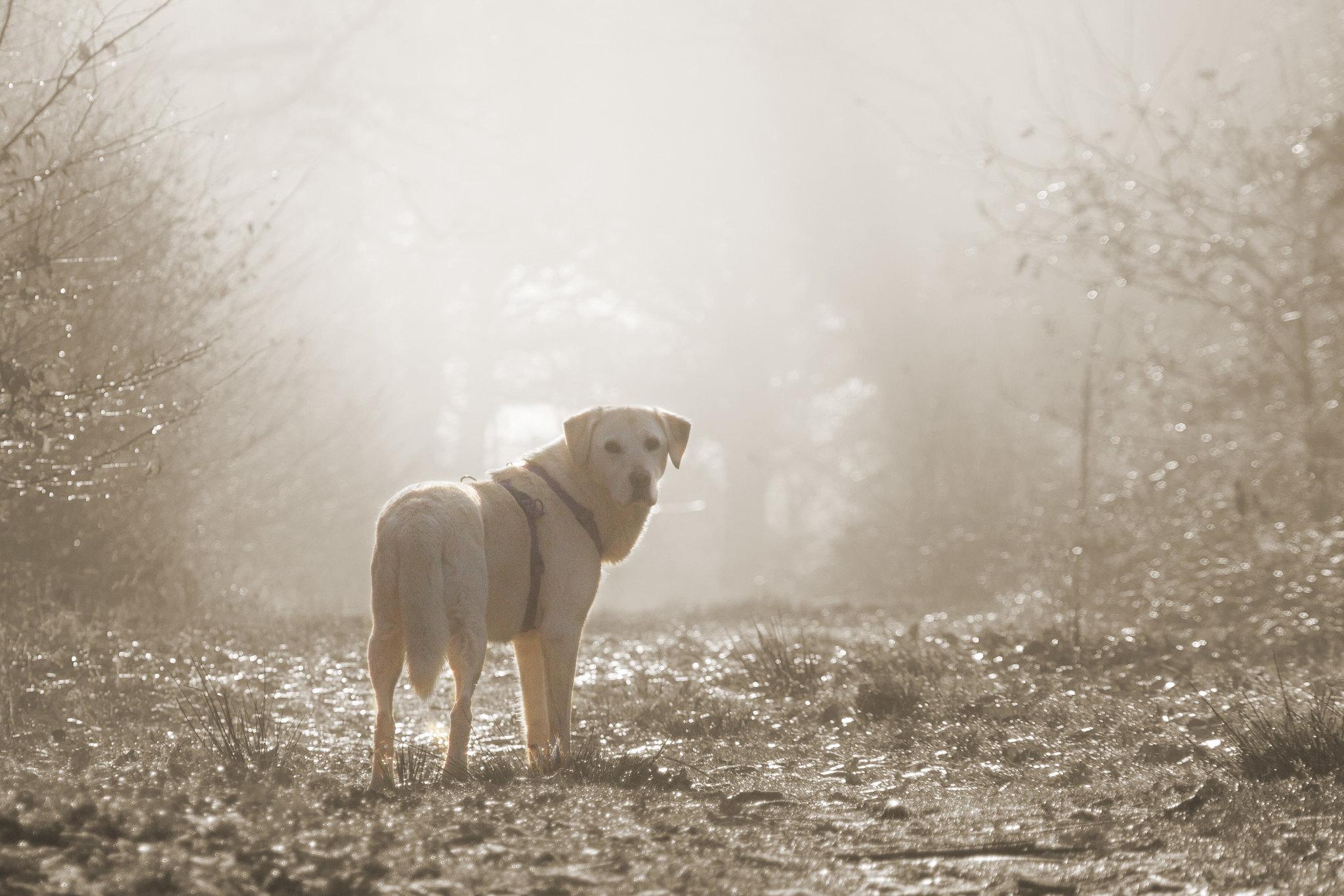 On a frosty morning 31295381862_01669f813c_k