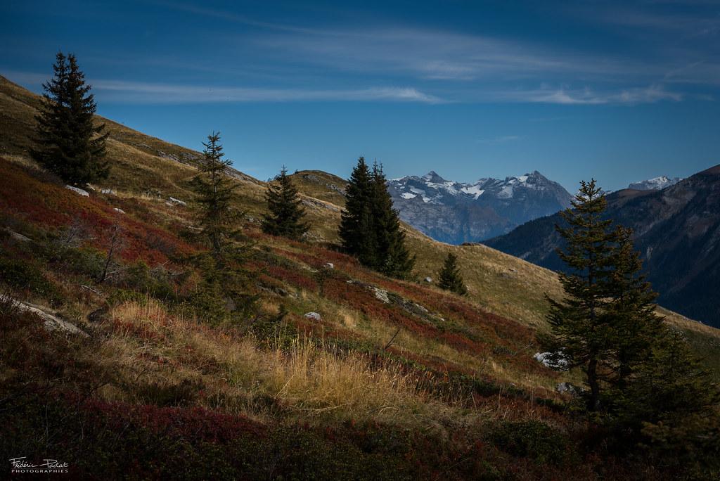 Les bruyères revêt ses couleurs d'automne