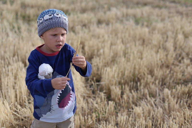studying the grain in the field