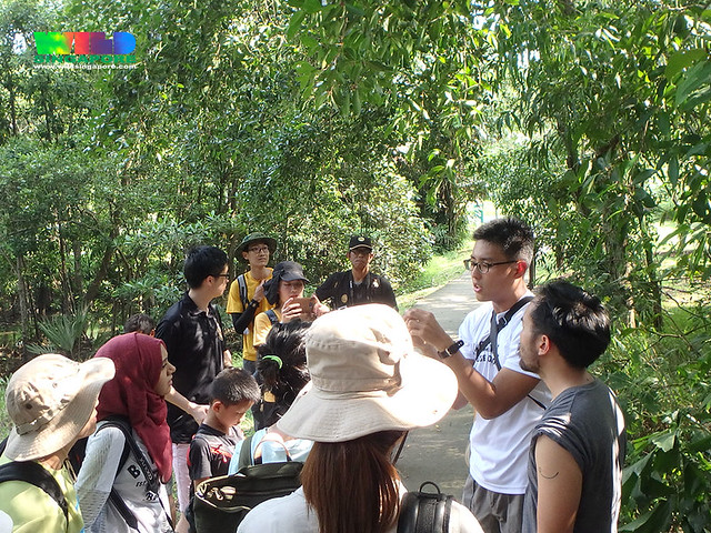 Mangrove flora workshop, Sep 2016: field session at Pasir Ris