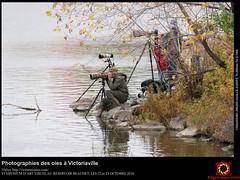 Photographies des oies à Victoriaville