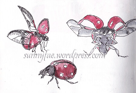 flying ladybird-sketches