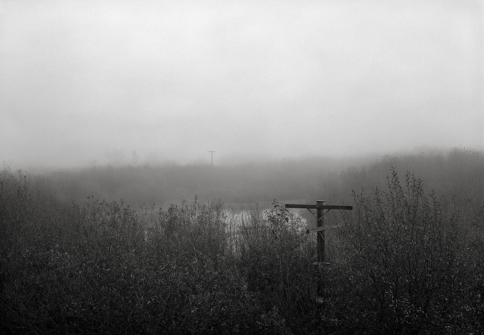 Wetlands, Oregon | by austin granger
