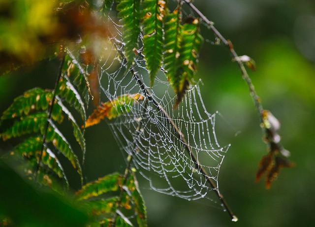 161113_REE_Monteverde_Reserve_101