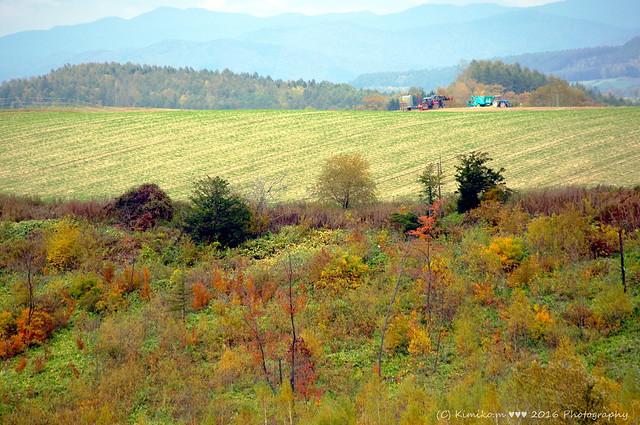 秋の丘風景1