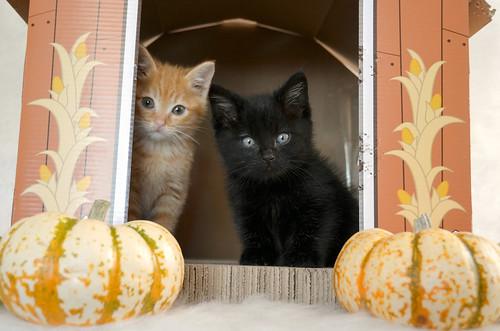 Halloween_Kittens