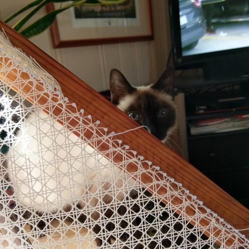Miss Sassy is supervising fringe tying.   #nofilter #handmade #catsofinstagram #caneweaving #triloom #triloomweaving #weaversofinstagram #triangleloom #weaving #siamese #siamesecat #divakitty #divakitteh #kitteh #cat #dantesspirit #handwoven