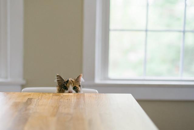 When's dinner?