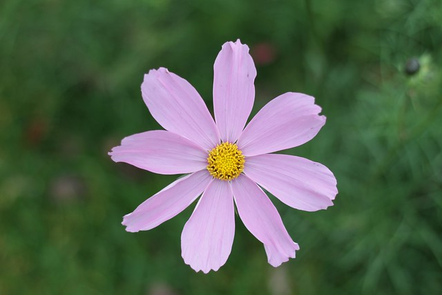 Cambridge walk - flowers