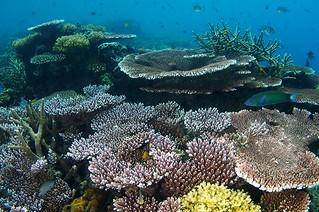 "<img src=""padi-diving-courses-shan-tang-jashen-and-thay-tioman-island-malaysia.jpg"" alt=""PADI diving courses, Shan, Yang, Jashen and Thay, Tioman Island, Malaysia"" />"