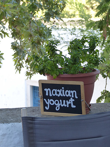 naxian yogurt