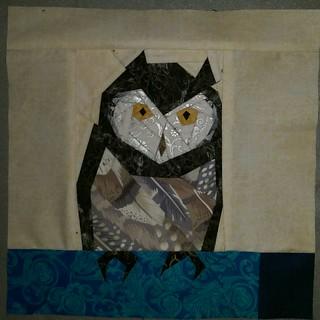 Pidgewigeon owl
