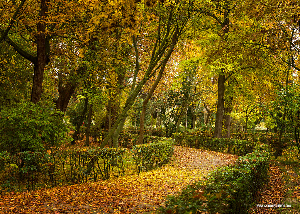 Autumn in Aranjuez 26