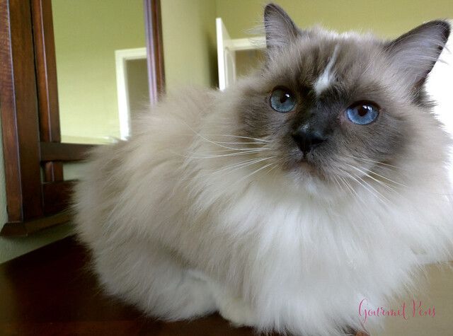 Whiskers & Paws August 2017 Edition 6