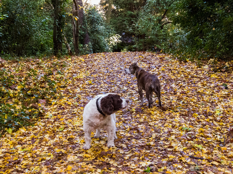 Jez and Max in the atumn leaves