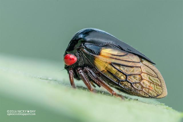 Treehopper (Tricentrus fulgidus) - DSC_4147
