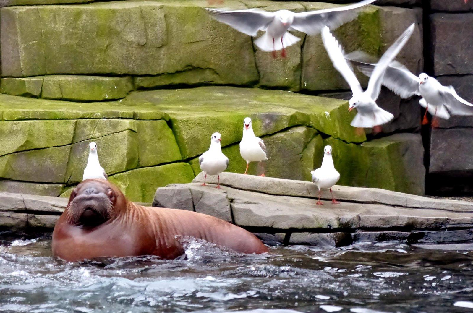 I Am The Walrus... Baby :)