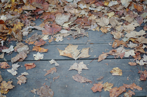 Leaves of Fall Crackled Underfoot