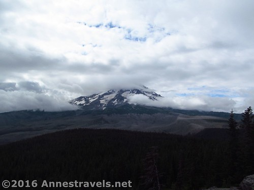 Mt. Hood as seen from Owl Point, Mount Hood National Forest, Oregon