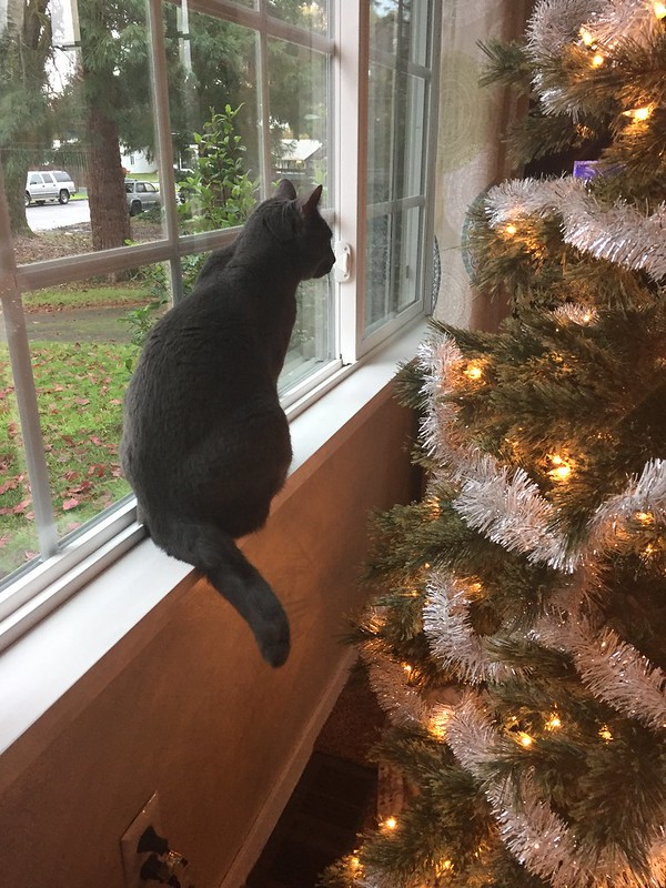 checking out the tree