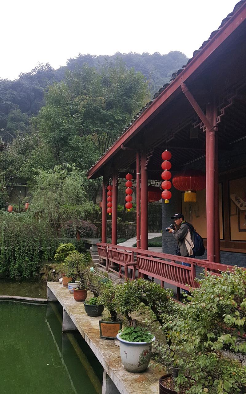 China tea plantation