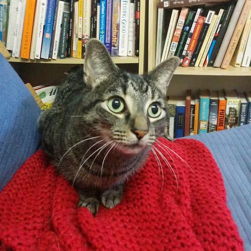 Shakespeare, on red #toronto #shakespeare #cats #caturday #catsofinstagram