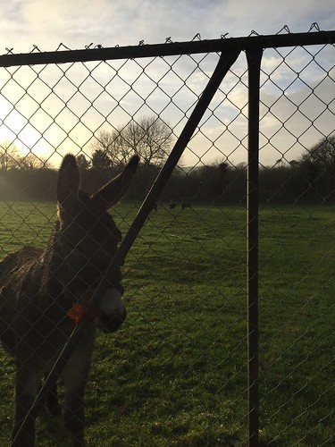 Eddie the donkey looking forward to his holidays