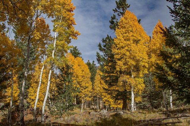 Aspen Nature Trail