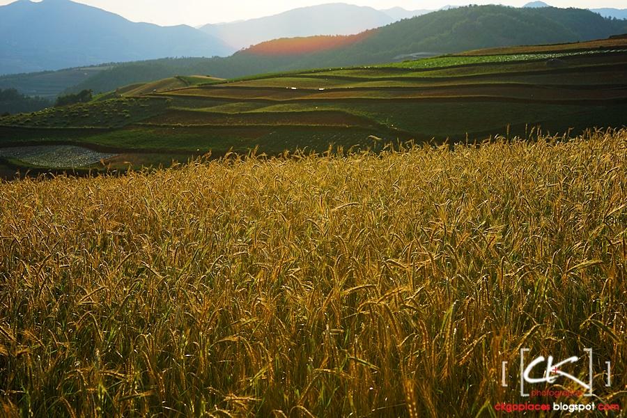 Yunnan_0089