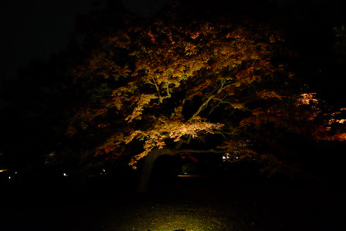 RIKUGIEN Colored Leaves light up 2016 01