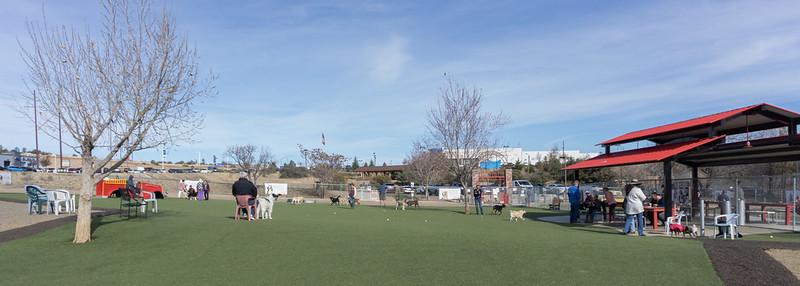 Prescott Dog Park Scene