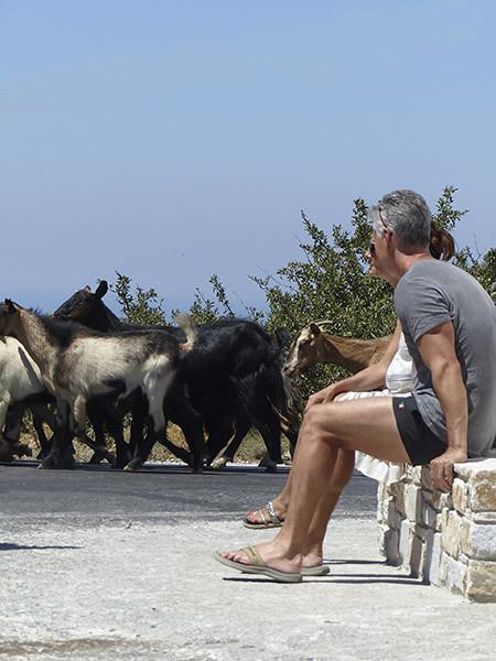 regarder les chèvres passer