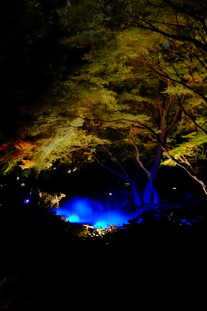RIKUGIEN Colored Leaves light up 2016 07